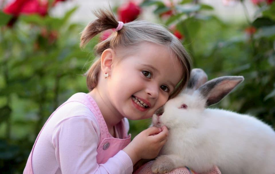 Formazione-e-comportamento-dei-conigli