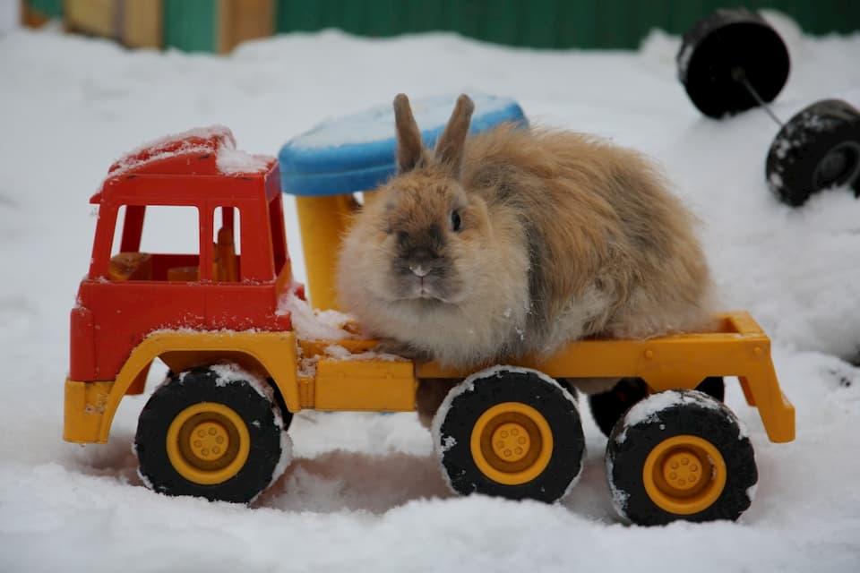 Giocattoli-per-Conigli