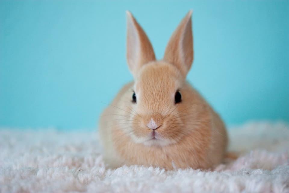 Salute-del-coniglio