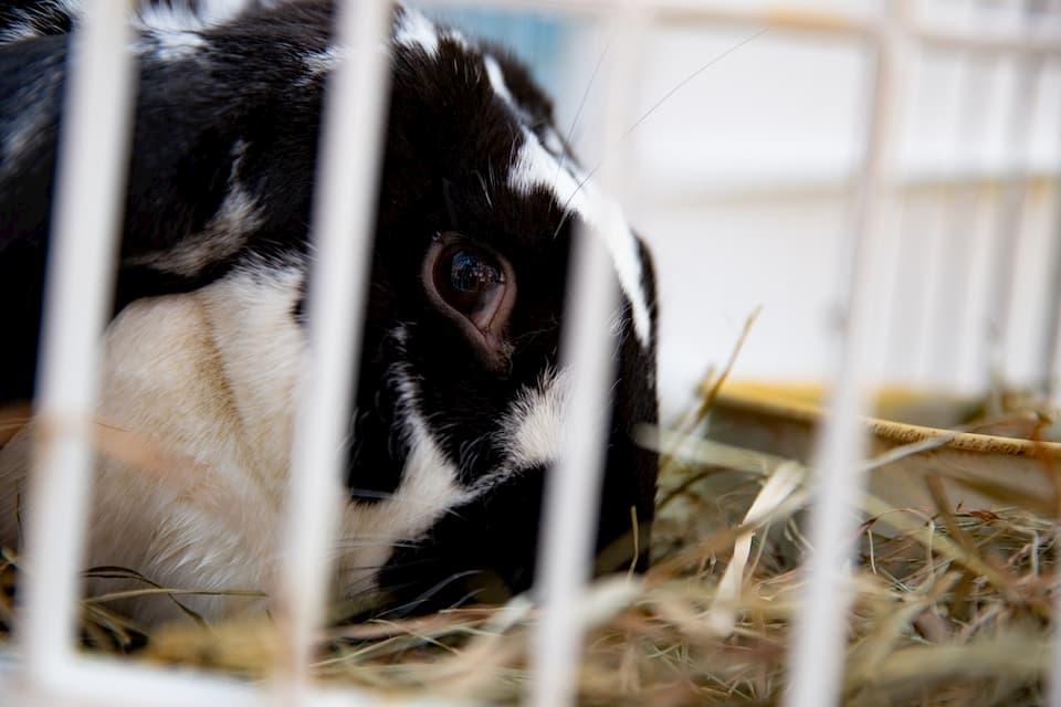 Scegliere-una-gabbia-per-conigli