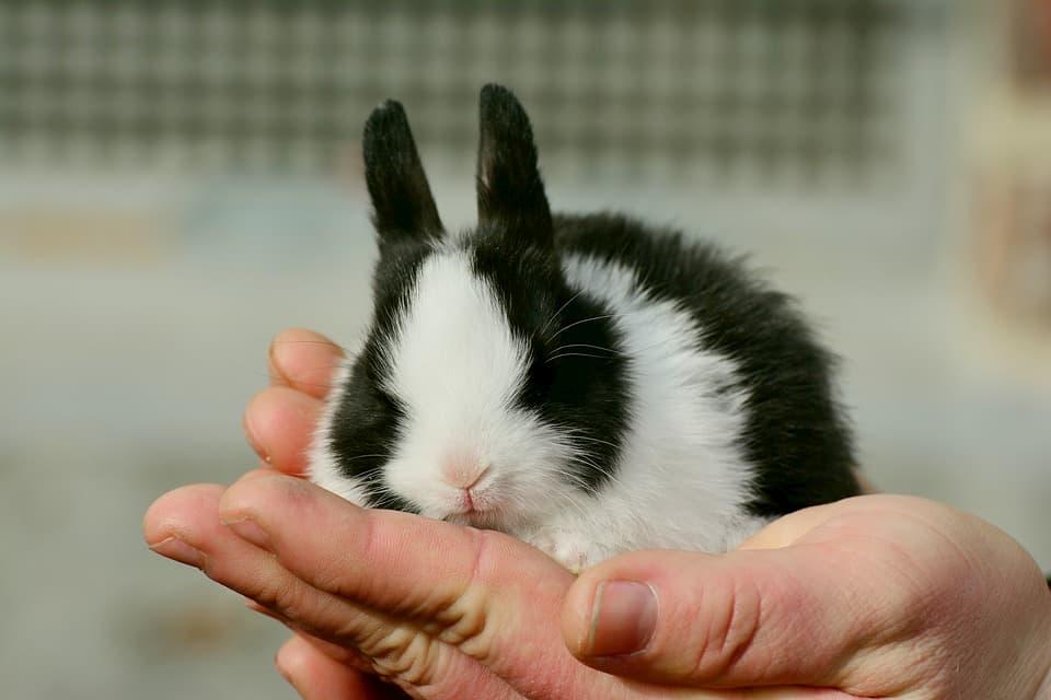 Un-coniglio-è-giusto-per-te