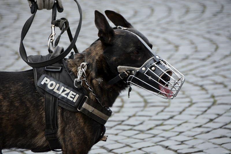 cani-poliziotto