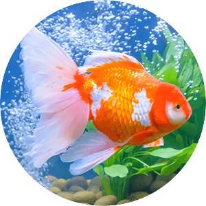 fishs-food